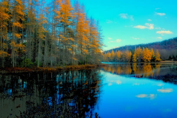 Photograph - Tamaracks In The Adirondacks by David Patterson