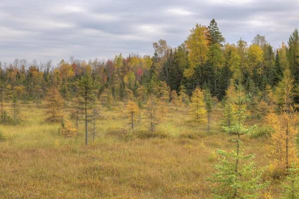 Photograph - Tamarack Field Fall Color, Northern Wisconsin by Paul Schultz