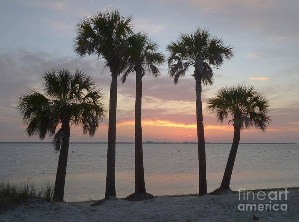 Photograph - Tampa Bay Sunset by Gail Kent