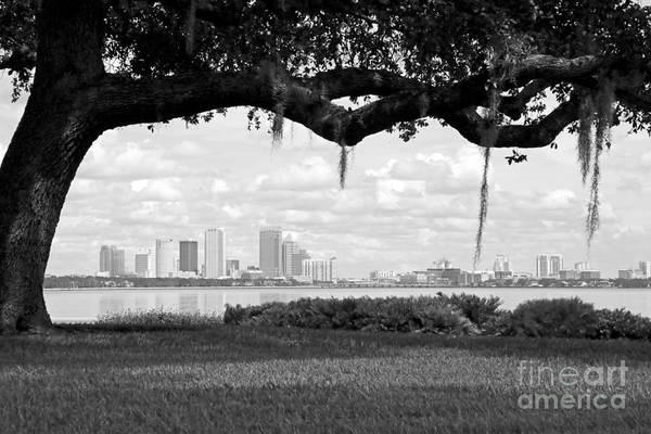Photograph - Tampa Skyline Through Live Oak - Black And White by Carol Groenen