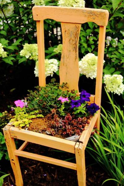 Photograph - Tan Chair Planter by Allen Nice-Webb