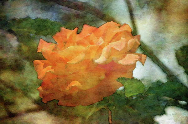 Photograph - Tangerine 0184 Idp_2 by Steven Ward