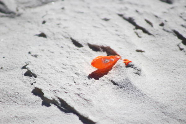 Photograph - Tangerine Balloon On White Sands by Colleen Cornelius
