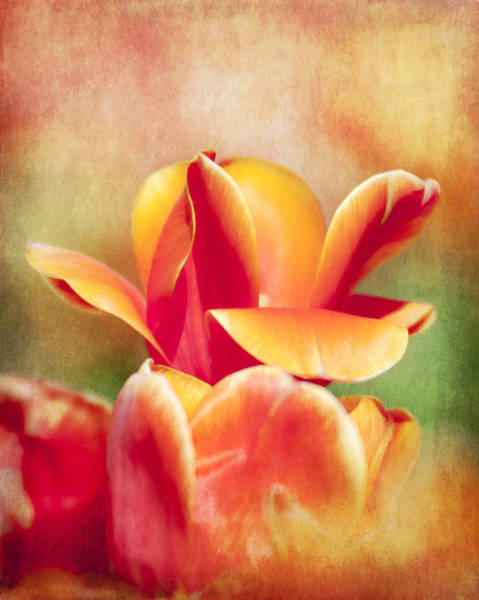 Photograph - Tangerine Tulip Sorbet by Jeff Mize