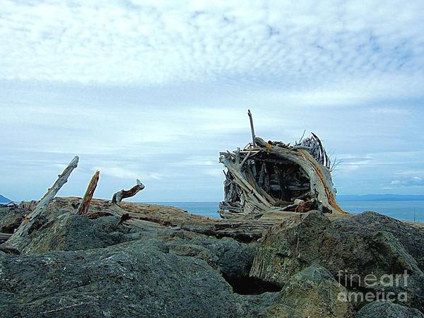 Photograph - Tangled Driftwood And Jetty Rocks by Delores Malcomson