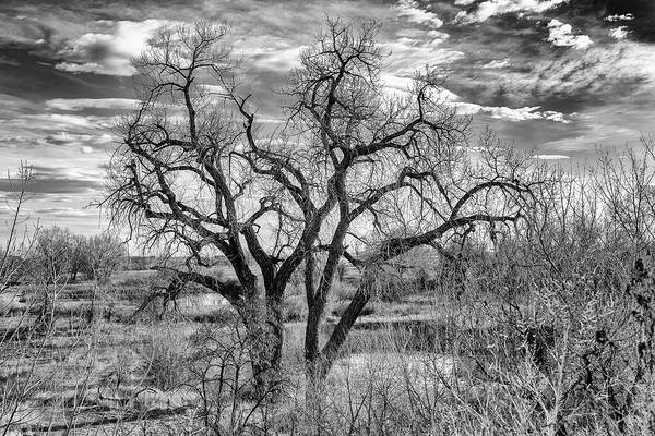 Photograph - Tangled Old Tree On Platte River by Philip Rodgers