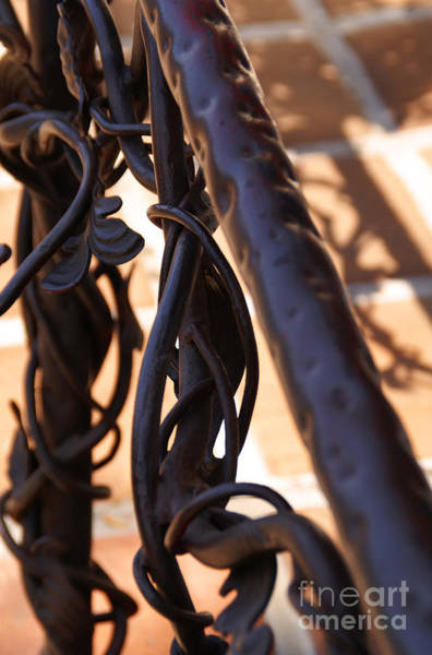 Photograph - Tangled Vines by Linda Shafer