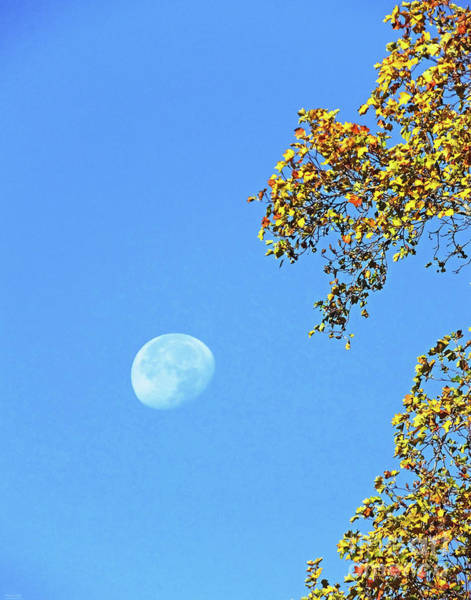 Photograph - Tanglewood Moon by Lizi Beard-Ward