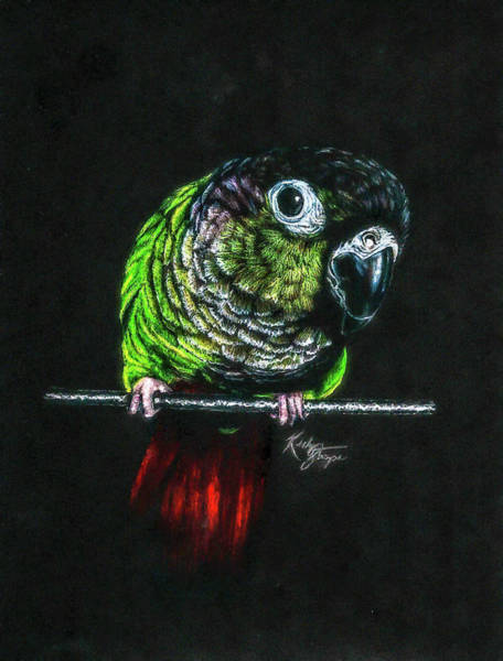Green Parrot Drawing - Tango by Kelly Strope