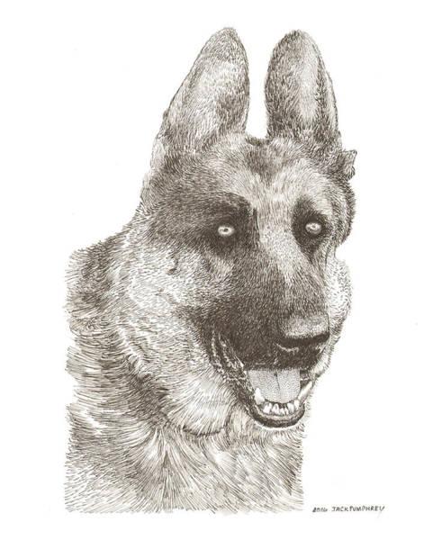 German Shepherd Drawing - Tango Von Rotenfuhr by Jack Pumphrey