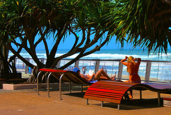 Photograph - Tanning On The Gold Coast by Susan Vineyard