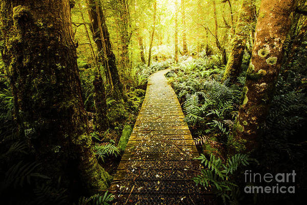 Ferns Photograph - Tarkine Tasmania Trails by Jorgo Photography - Wall Art Gallery