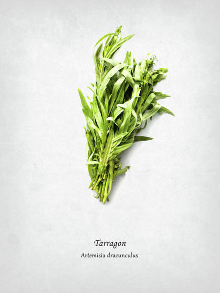 Wall Art - Photograph - Tarragon by Mark Rogan