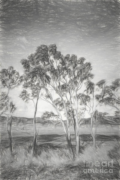 Monochrome Digital Art - Tasmanian Countryside Illustration by Jorgo Photography - Wall Art Gallery