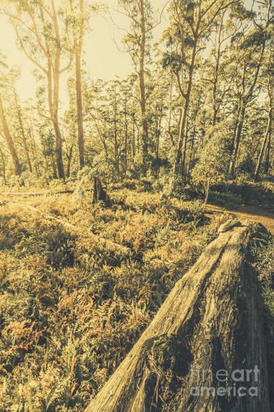 St. Marys Photograph - Tasmanian Forest Sunrise by Jorgo Photography - Wall Art Gallery