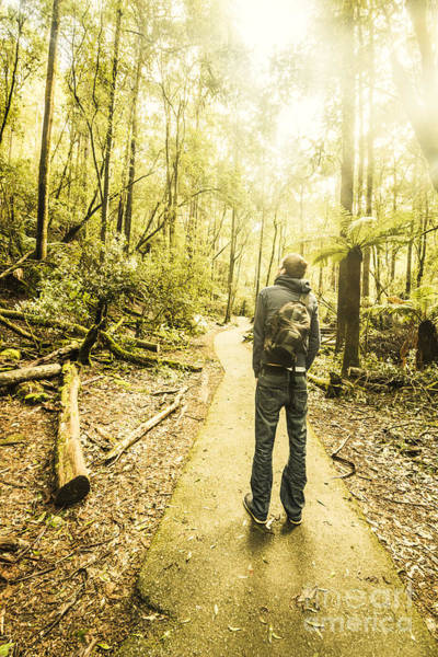 Photograph - Tasmanian Rainforest Tourist by Jorgo Photography - Wall Art Gallery