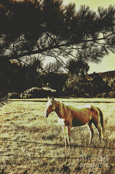 Farmyard Photograph - Tasmanian Rural Farm Horse by Jorgo Photography - Wall Art Gallery