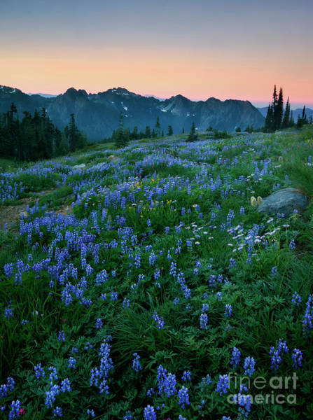 Wall Art - Photograph - Tatoosh Dawn Glow by Mike Dawson