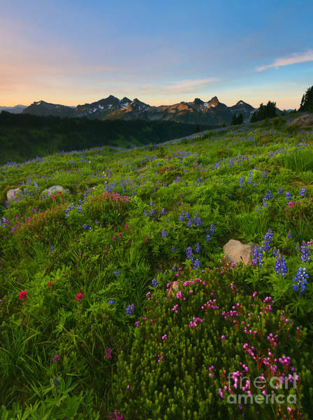 Wall Art - Photograph - Tatoosh Wildflower Sunrise by Mike Dawson