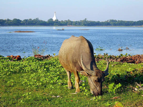 Photograph - Taungthaman Lake, Amarapura, Myanmar by Kurt Van Wagner