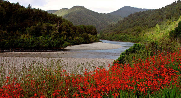 Orchard Digital Art - Taupo New Zealand River And Flowers by Mark Duffy