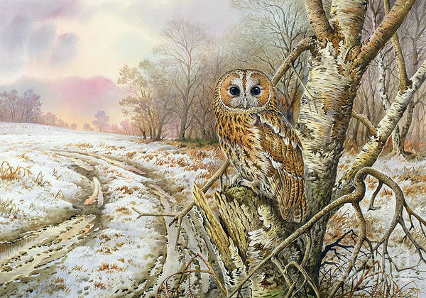 Stump Painting - Tawny Owl by Carl Donner