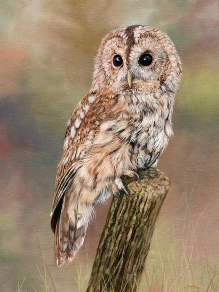 Owl Painting - Tawny Owl by David Stribbling