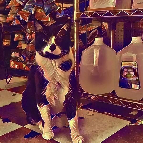 Wall Art - Photograph - Tayger Takes His Job As A Bodega Cat by Gina Callaghan