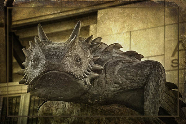 Photograph - Tcu Horned Frog 2015 by Joan Carroll