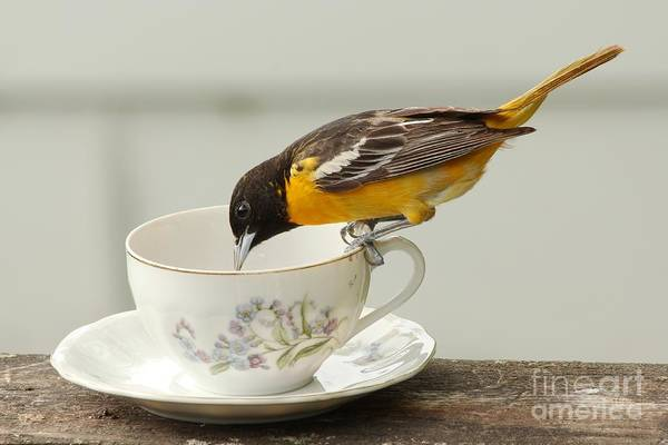 Wall Art - Photograph - Tea Anyone by Lori Tordsen