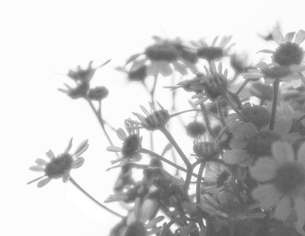 Photograph - Tea Dream by Terri Hart-Ellis