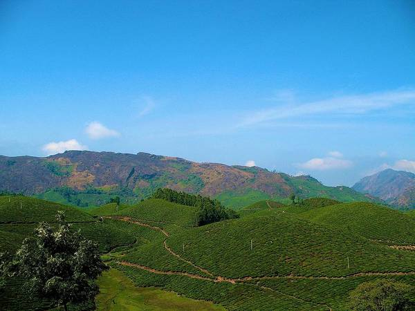 Kerala Photograph - Tea Plantation by Art Spectrum
