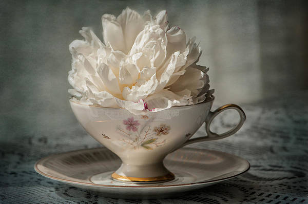 Romantic Flower Photograph - Peony In A Teacup  by Maggie Terlecki