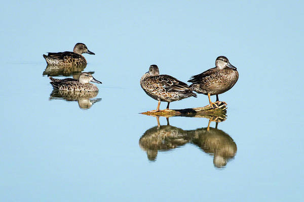 Photograph - Teal Reflections by Dawn Currie