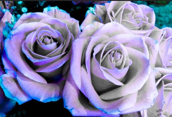 Photograph - Teal Tipped Roses by Marian Palucci-Lonzetta