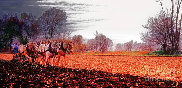 Photograph -  Team Of Draft Horses Plowing Early Spring  by Tom Jelen