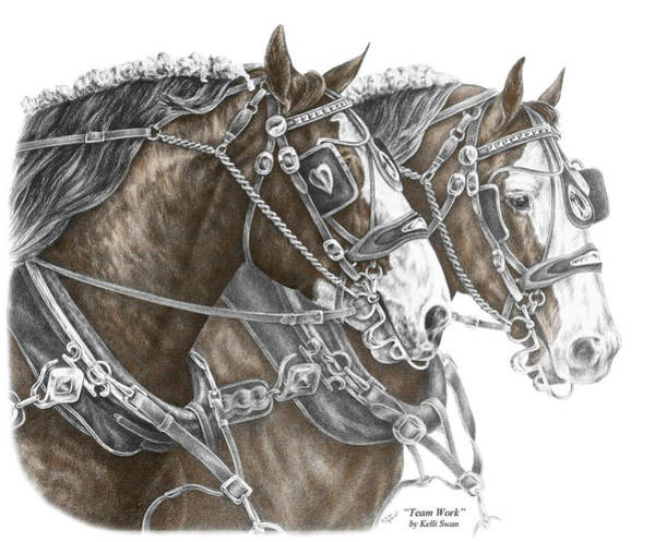 White Horse Wall Art - Drawing - Team Work - Clydesdale Draft Horse Print Color Tinted by Kelli Swan