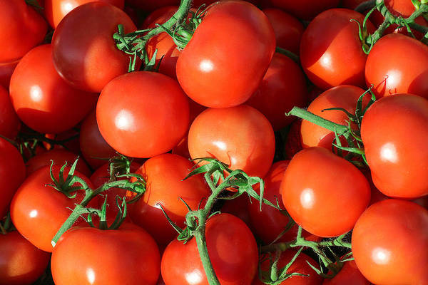Photograph - Teaming With Tomatoes by Todd Klassy