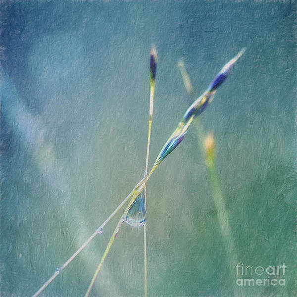 Wall Art - Photograph - Tears Are What Holds Us Together by Priska Wettstein