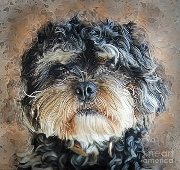 Photograph - Ted The Cockapoo by Brian Tarr