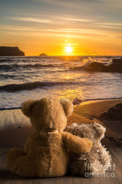 Sun Set Photograph - Teddies Watching The Sunset by Amanda Elwell