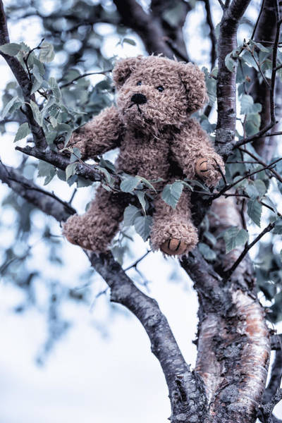 Wall Art - Photograph - Teddy Bear In Tree by Joana Kruse