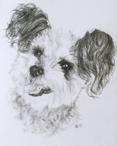 Mutt Drawing - Teddy Bear by Barbara Keith