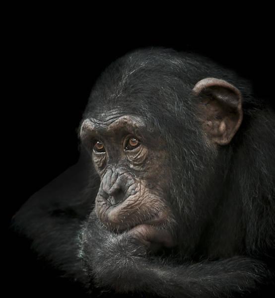 Primate Photograph - Tedium by Paul Neville