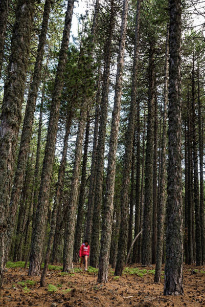 Scenery Wall Art - Photograph - Teenage Walking In The Forest by Michalakis Ppalis