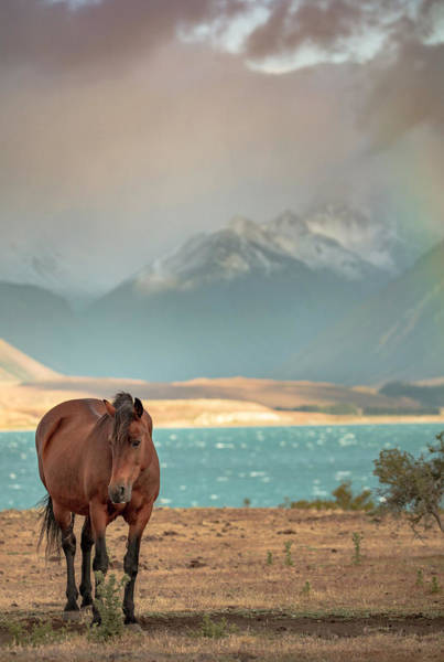 Photograph - Tekapo Horse by Chris Cousins