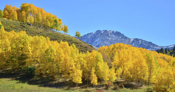 Photograph - Telluride Hillside by Ray Mathis