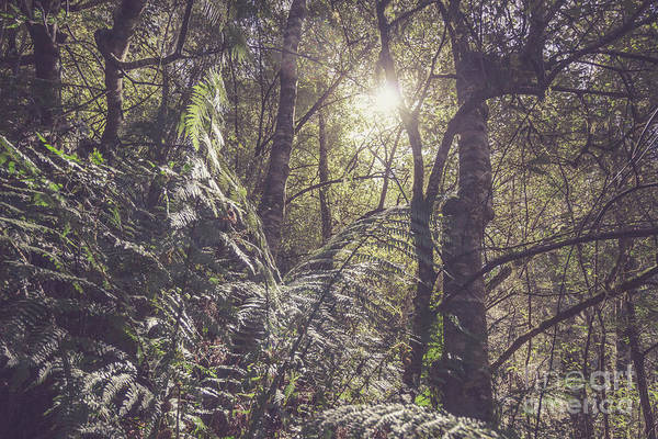 Rain Forest Photograph - Temperate Rainforest Canopy by Jorgo Photography - Wall Art Gallery