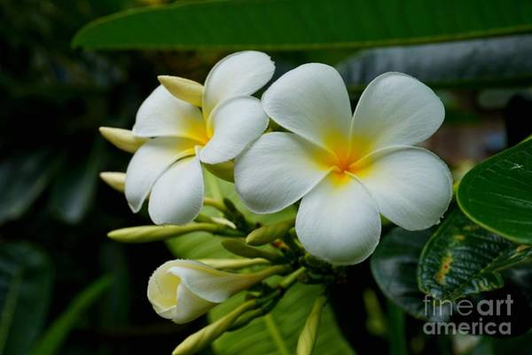 Photograph - Temple Flowers Side View by Christopher Shellhammer