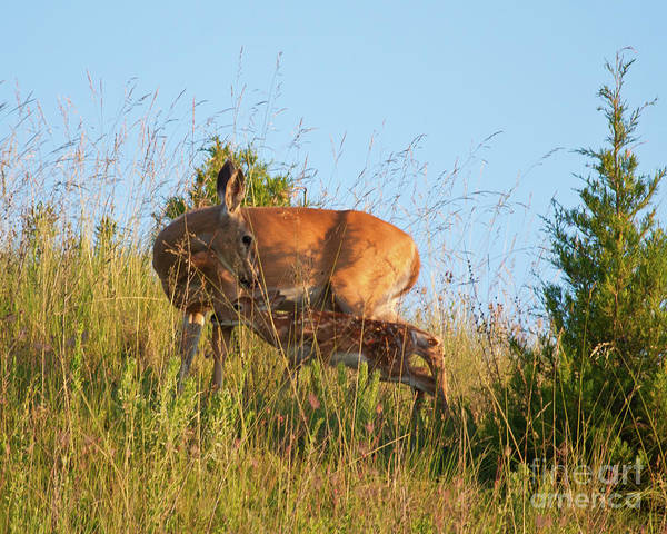 Photograph - Tender by Katie LaSalle-Lowery